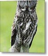 Great Grey Owl, Water Valley, Alberta Metal Print