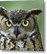 Great Horned Owl Bubo Virginianus Metal Print