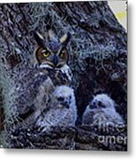 Great Horned Owl Twins Metal Print