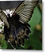Great Mormon Butterfly Metal Print