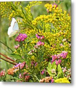 Great Southern White Butterfly Likes The Pink Flowers Metal Print