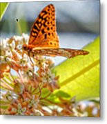 Great Spangled Fritillary Butterfly Metal Print