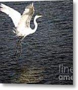 Great White Egret Flight Series - 9 Metal Print