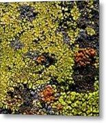 Green Algea Metal Print