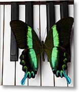 Green And Black Butterfly On Piano Keys Metal Print