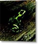 Green And Black Poison Dart Frog Metal Print