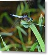 Green And Blue Dragonfly Metal Print