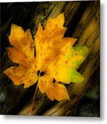 Green And Yellow Maple Leaf In Soft Focus Rests On A Log. Metal Print