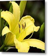 Green And Yellow - Lily Metal Print