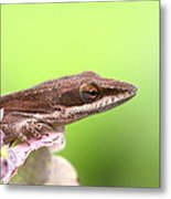 Green Anole In Pastels Metal Print
