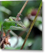 Green Anole Metal Print