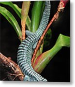 Green Arboreal Alligator Lizard Abronia Metal Print