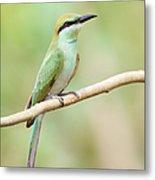 Green Bee-eater (merops Orientalis) Metal Print