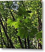 Green Canopy Metal Print