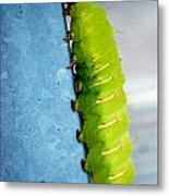 Green Caterpillar  Metal Print