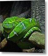 Green Coiled Snake Metal Print
