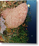 Green Coral With Red Fish And Pink Metal Print