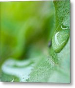 Green Drop Of Light Metal Print