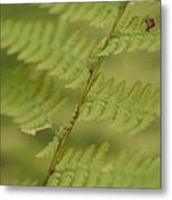 Green Ferns Blend Together Metal Print by Heather Perry