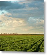 Green Field With Clouds Metal Print by Topher Simon photography