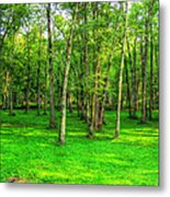 Green Floored Forest Metal Print