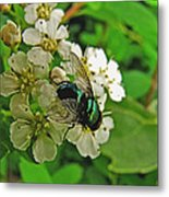 Green Fly Metal Print