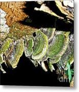 Green Fungi Metal Print