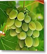Green Grape And Vine Leaves Metal Print by Sami Sarkis