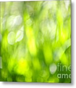 Green Grass In Sunshine Metal Print by Elena Elisseeva