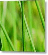Green Green Grass Of Home Metal Print