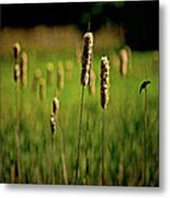 Green Grow The Rushes O Metal Print
