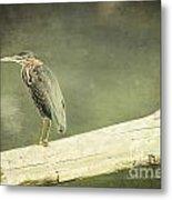 Green Heron On A Log Metal Print