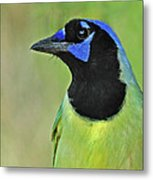 Green Jay Portrait Metal Print