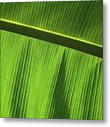 Green Leaf, Close-up Metal Print