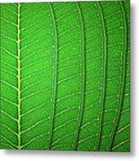 Green Leaf Texture Metal Print