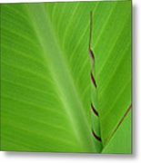 Green Leaf With Spiral New Growth Metal Print