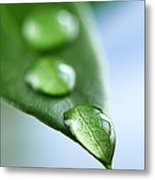 Green Leaf With Water Drops Metal Print