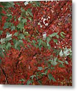Green Leaves Against Red Leaves Metal Print
