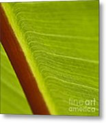 Green Leaves Series  8 Metal Print