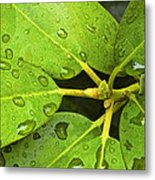 Green Leaves With Water Droplets Metal Print