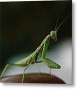 Green Mantis Metal Print