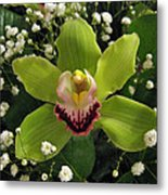 Green Orchid In Baby's Breath Metal Print