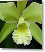 Green Orchid Metal Print