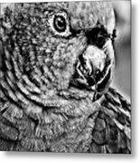 Green Parrot - Bw Metal Print