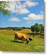 Green Pasture Metal Print by Catherine Reusch Daley