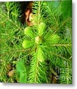 Green Pine Needles 2 Metal Print