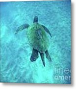Green Sea Turtle 2 Metal Print