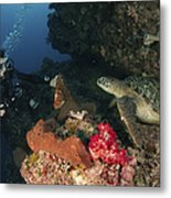 Green Sea Turtle And Underwater Metal Print