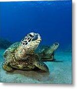 Green Sea Turtle Couple Metal Print