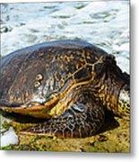 Green Sea Turtle Of Hawaii Metal Print